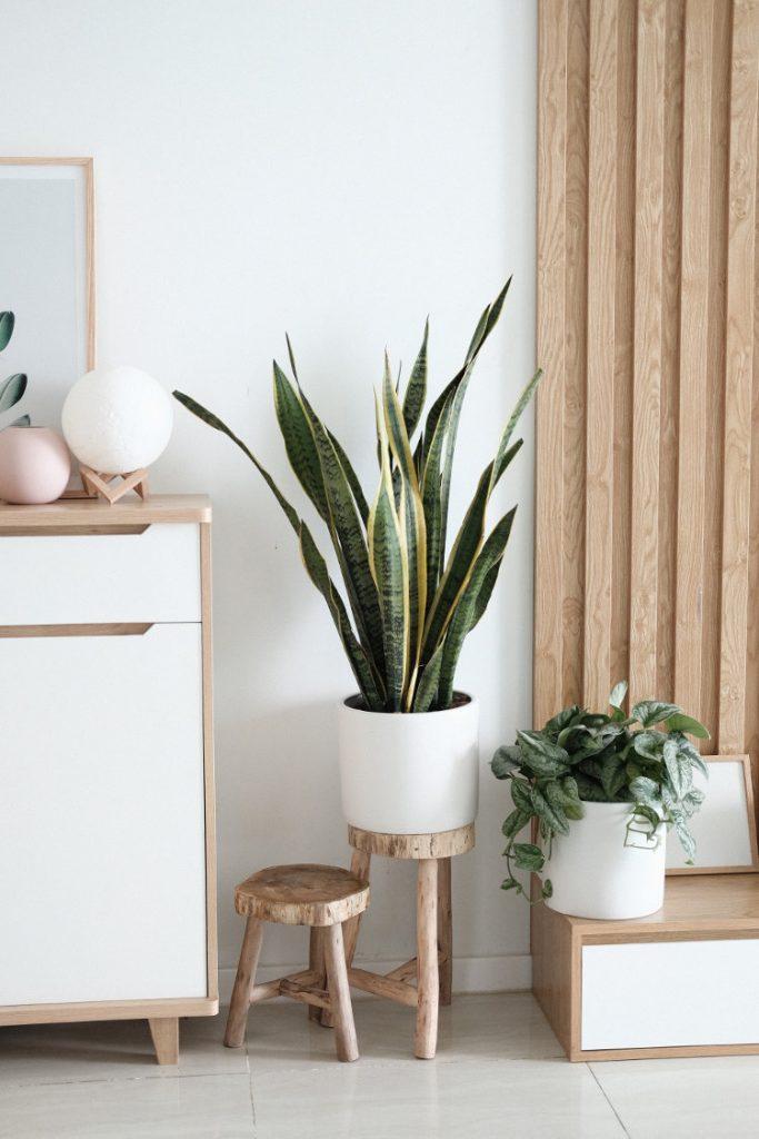 Soignez l'air intérieur grâce aux plantes