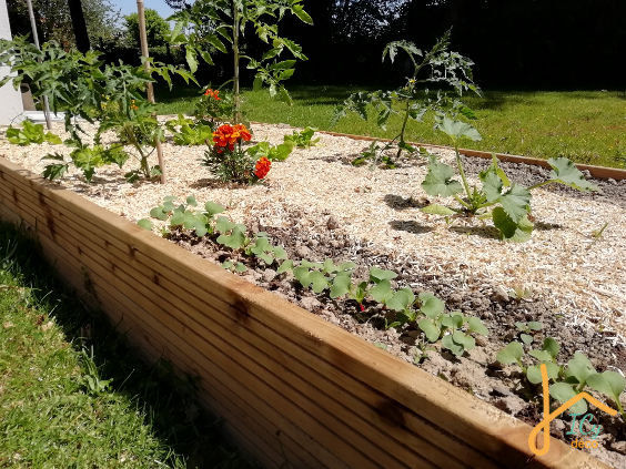 Des radis en pleine croissance dans un potager surélevé Montessori friendly | ICy déco