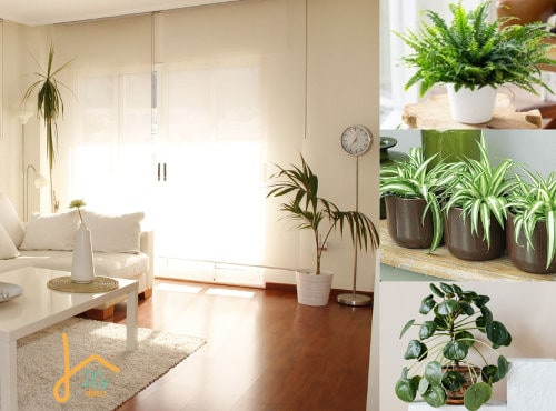 Top 5 plantes dépolluantes à adopter dans un intérieur familial | ICy déco