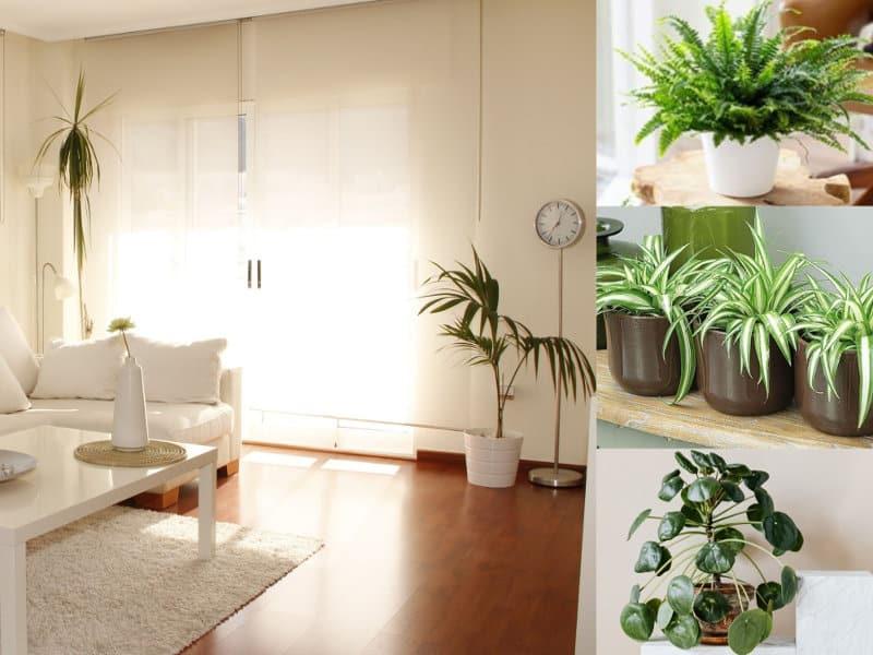 Top 5 des plantes dépolluantes à adopter dans un intérieur familial | ICy déco